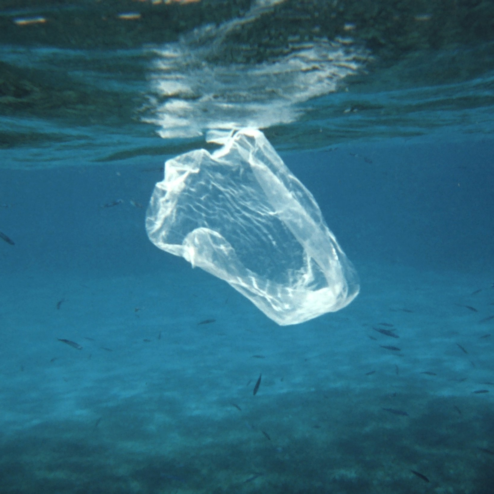 """Myth: All ocean plastic floats - This is a fairly common misconception. The more scientists research plastic, the more they are coming to understand how it behaves in the marine environment. There are many types of plastic—from polystyrene to PVC to nylon. Different plastics have different densities, which allow them to sink, float, or even stay suspended in the water column. Plastic can also become """"biofouled"""" meaning bacteria and other organisms attach to the surface of it, making it heavier, and causing it to sink. Researchers now recognize the seafloor as a sink (area of accumulation) for microplastics."""