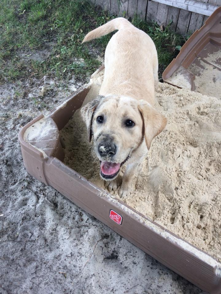 Nothing better than digging. Photo credit: Jane Wolf