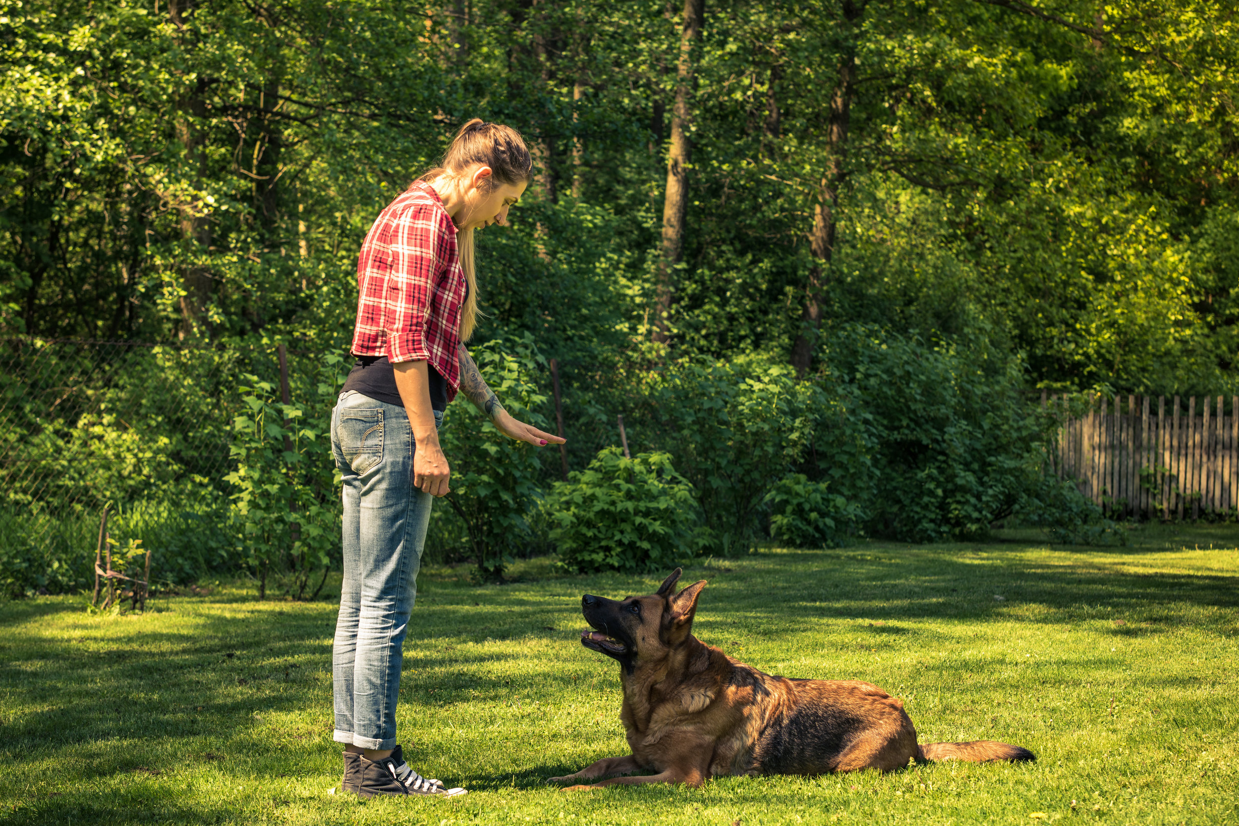 Hand signals and voice commands don't get dogs to behave -