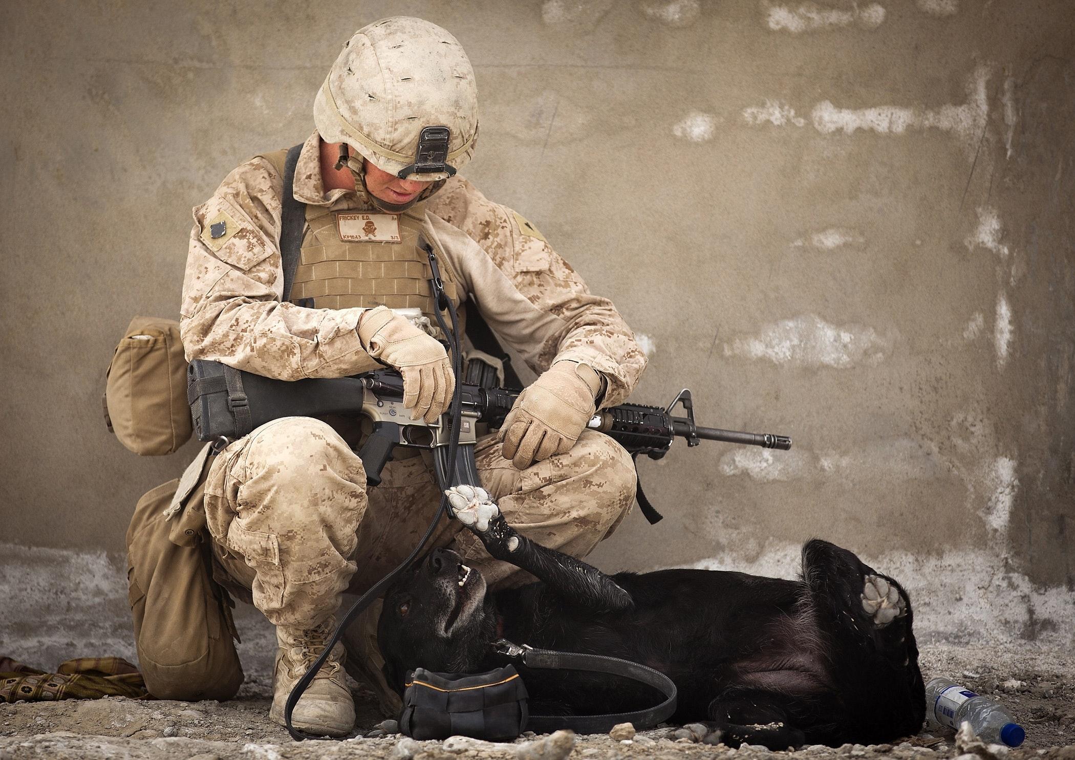 animal-army-battle-236741.jpg