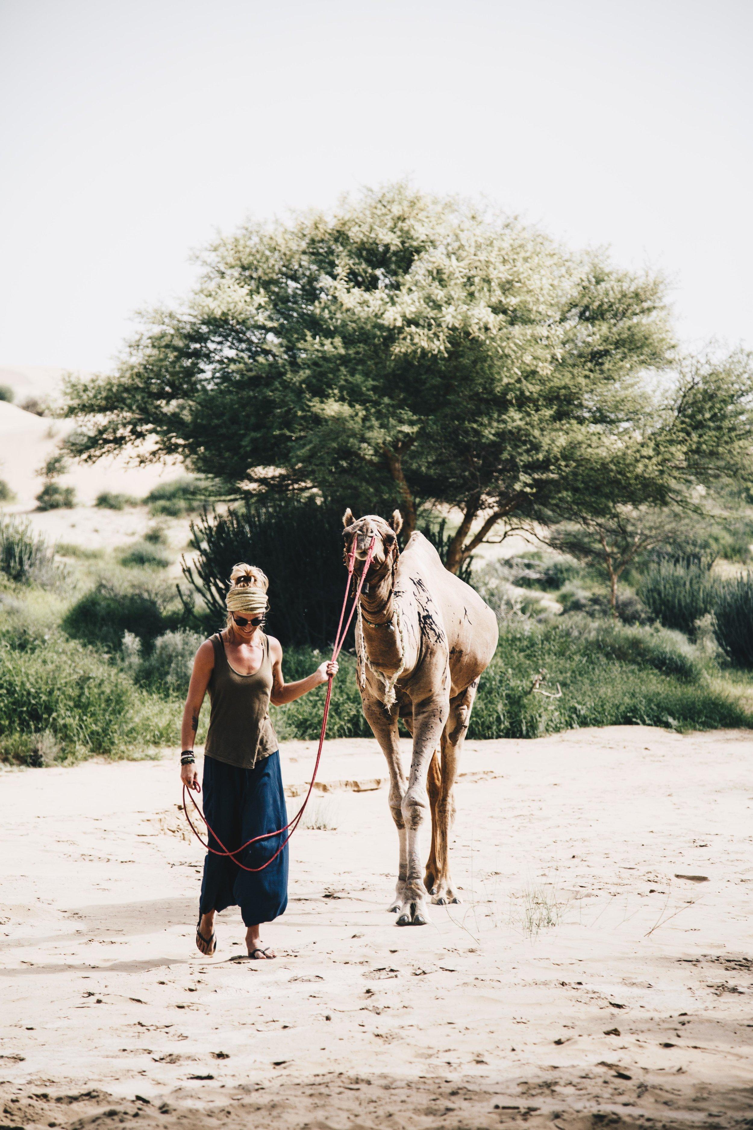 india2_jaislamer_camel-2.jpg