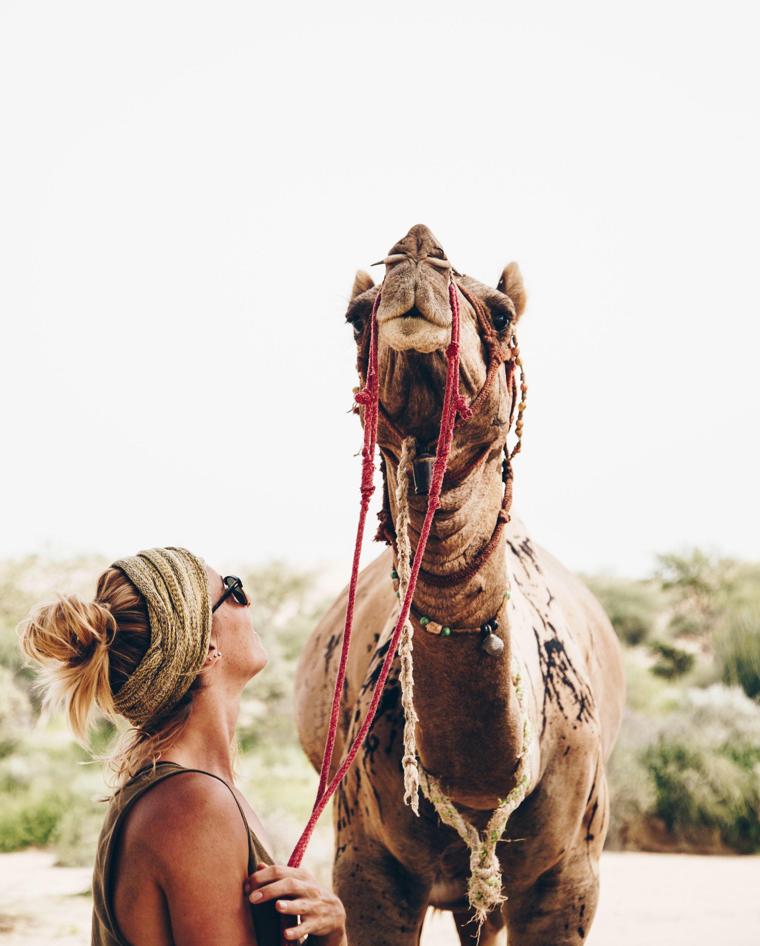 india2_jaislamer_camel-5.jpg