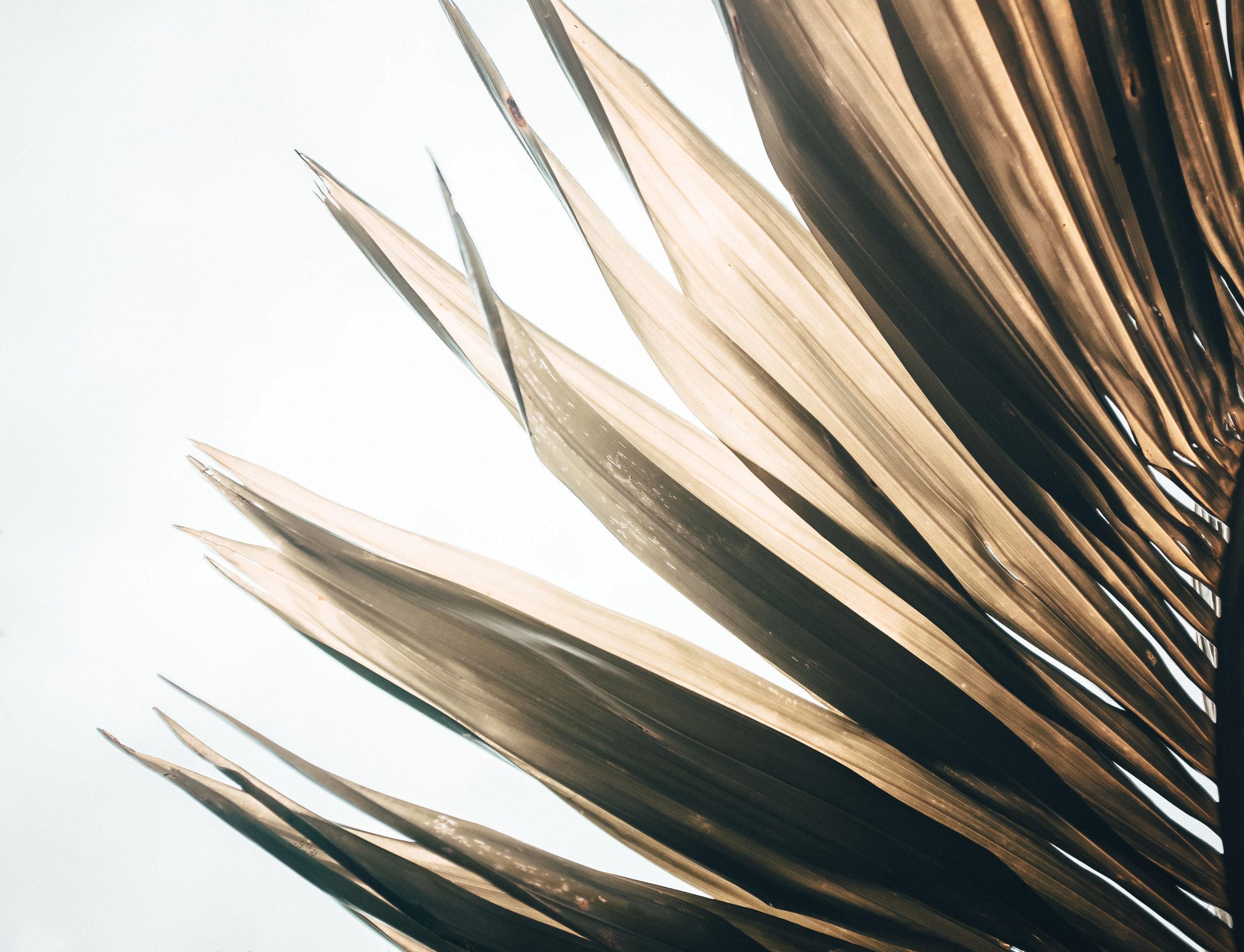 lensandpaperback_hoian-12.jpg
