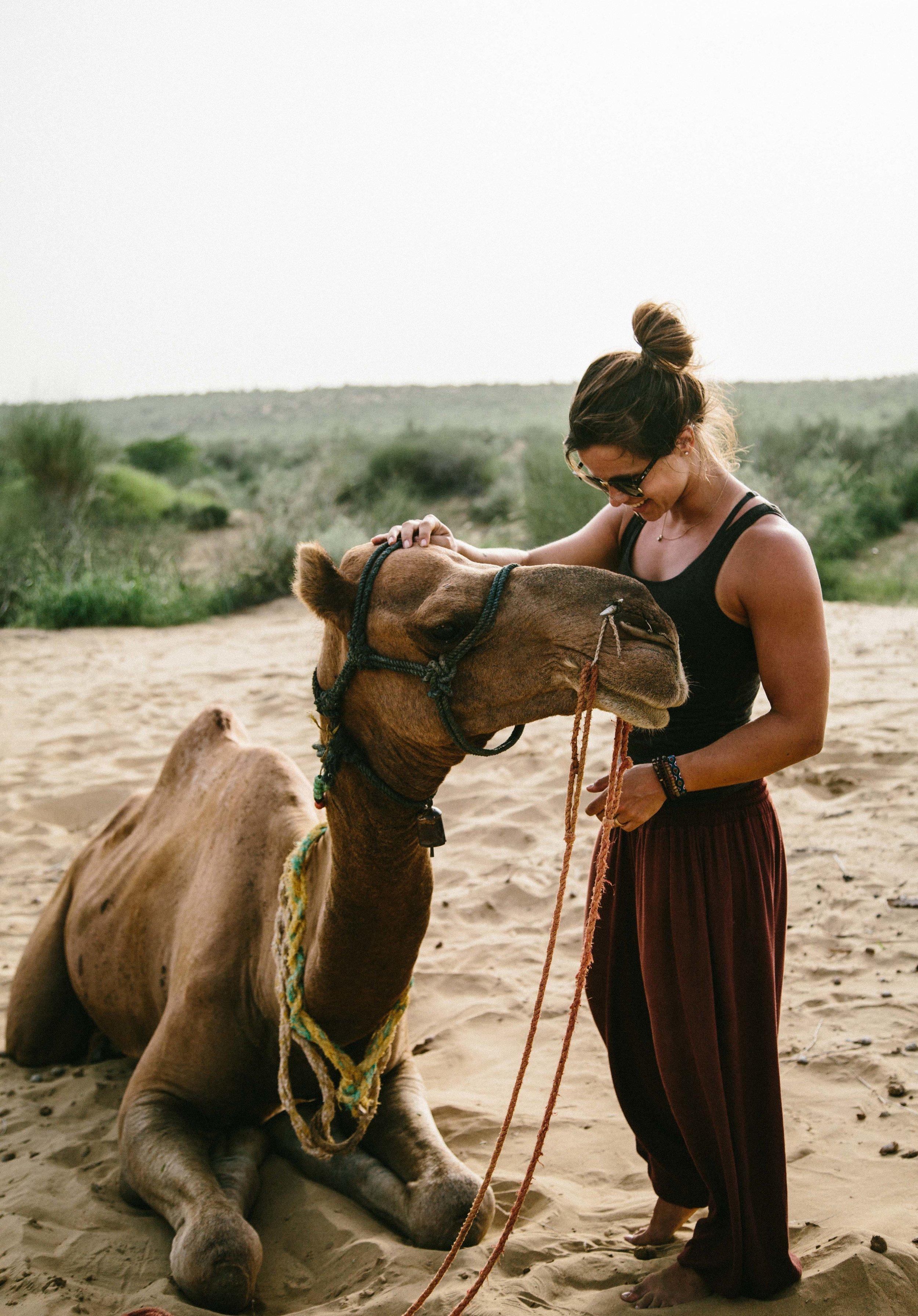 india2_jaislamer_camel-14.jpg