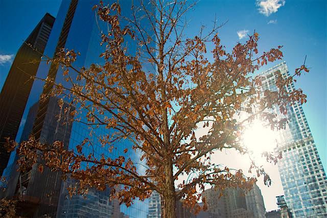 new-york-tree-CC-tubafil.jpg