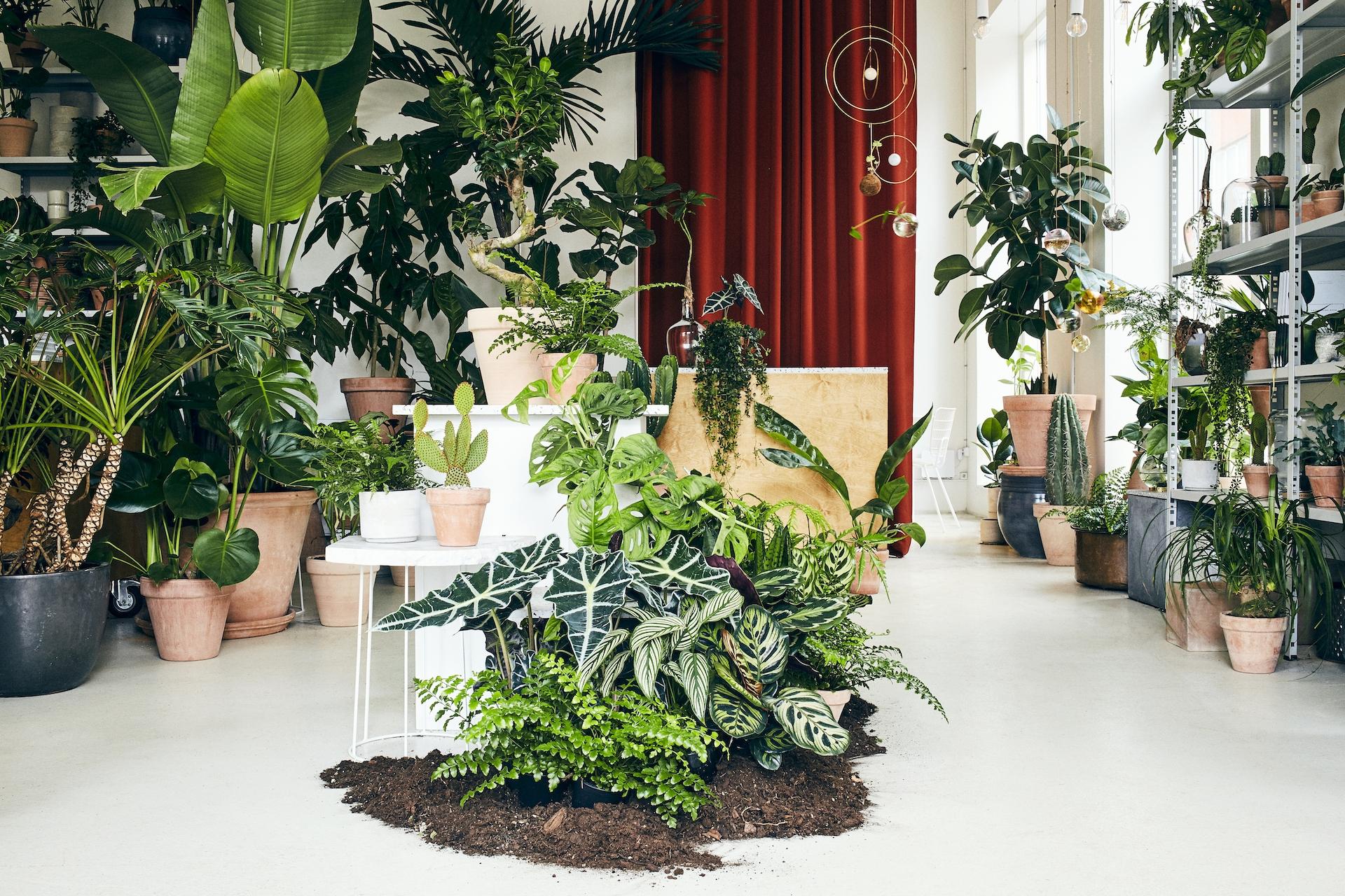 Plant København.jpg