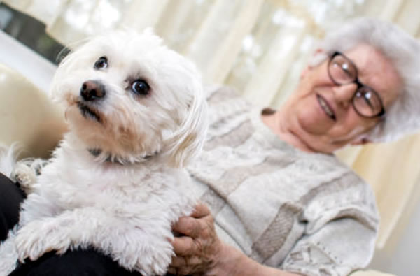 dogs-for-the-elderly-1 (1).jpg