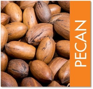 pecans whole square.jpg