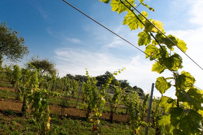 wijndomein Coberger Luc Haekens Zichem-foto Luk Collet-6841.jpg