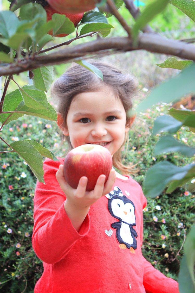 My granddaughter picking an apple in my garden.