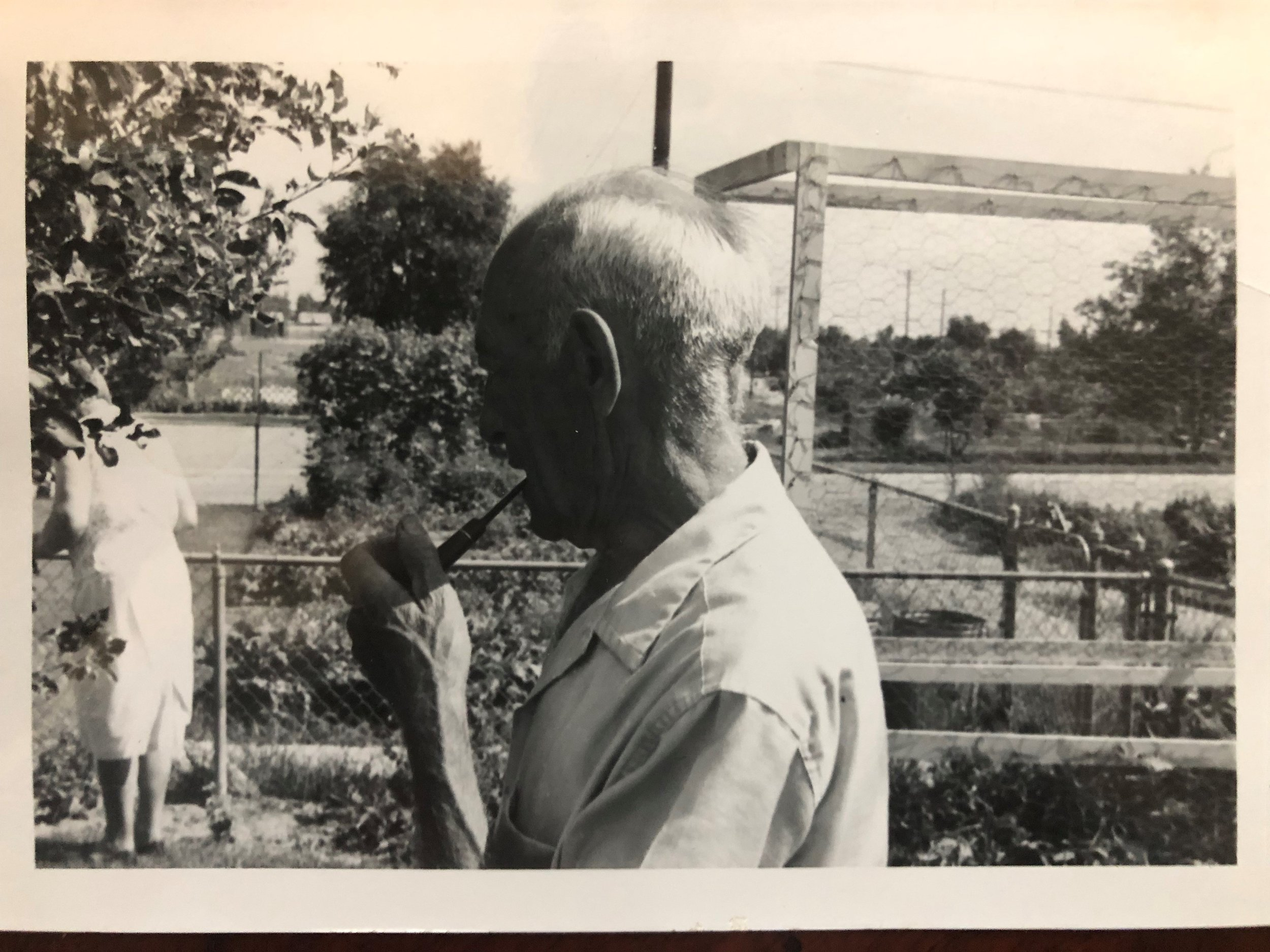My grandpa out in his garden.