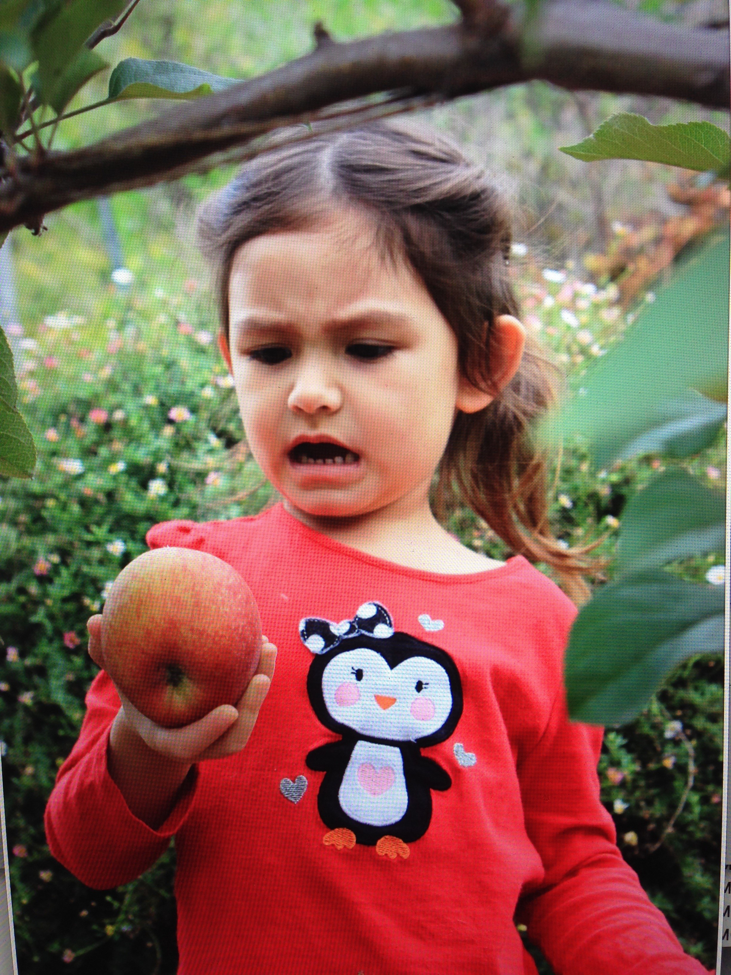 "My grand daughter's reaction to seeing pest damage on one of my apples! She thinks that ""pests are yucky!"""