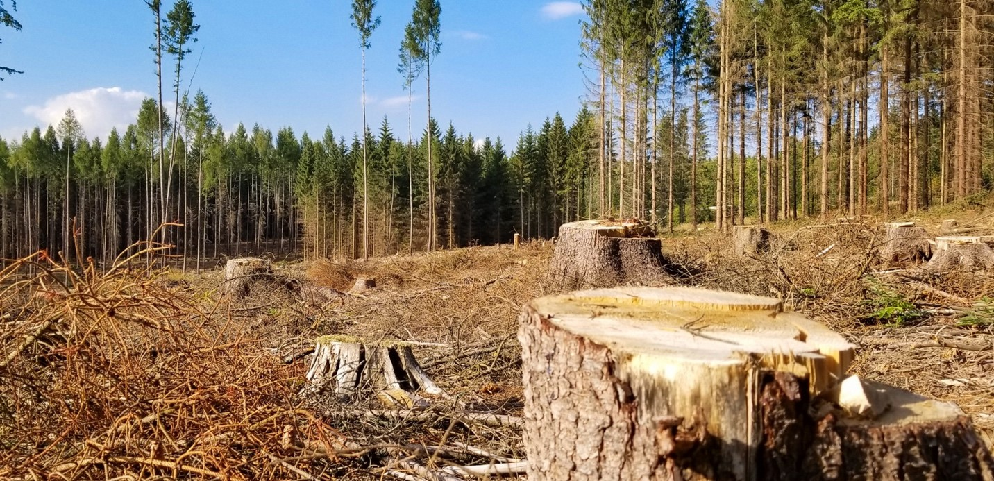 Image of deforestation by  Vera Kratochvil . Actually, this was originally a pest-based mass murder – bark beetle infestation.