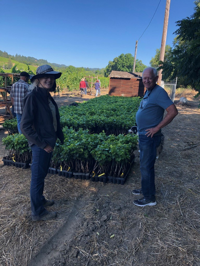 Dr. Don Hopkins from the University of Florida (right) and Sonoma County grape farm advisor Rhonda Smith (left). We spent two days planting the young grapevines pictured here for a Pierce's Disease biocontrol trial this summer.