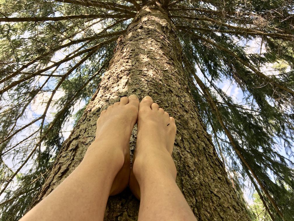 feet tree copy.jpg