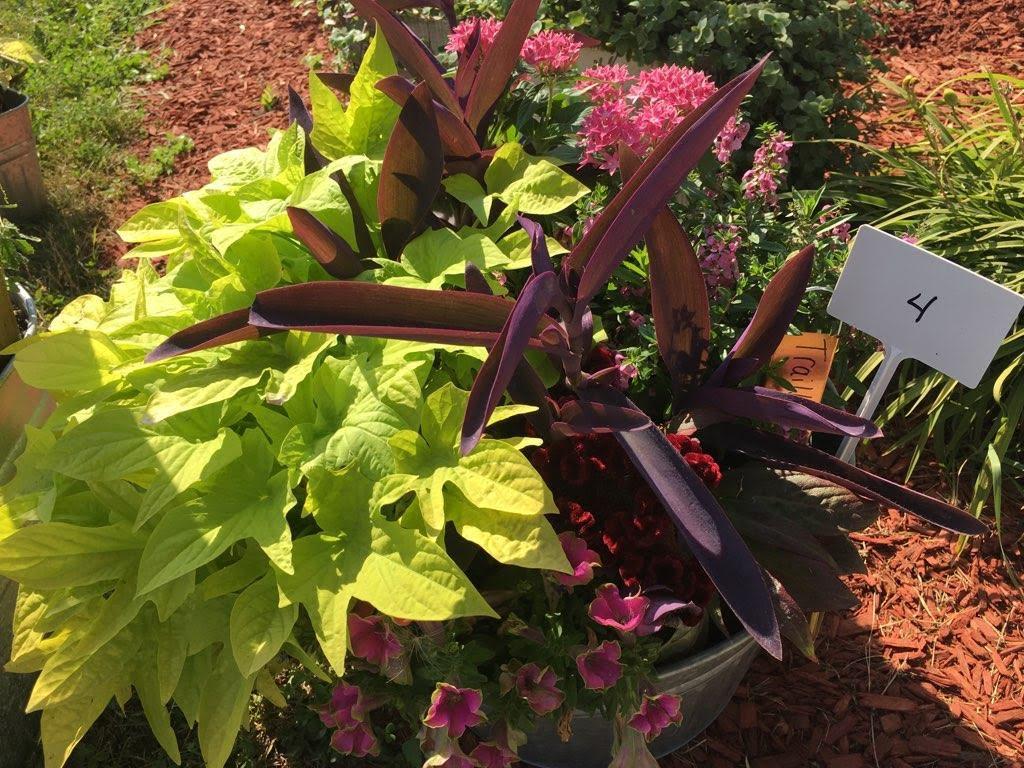 BEST USE OF PLANTS | Trailblazers