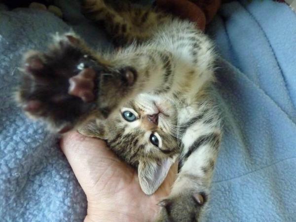 The Amazing Stroll: OMG!! A kitten!