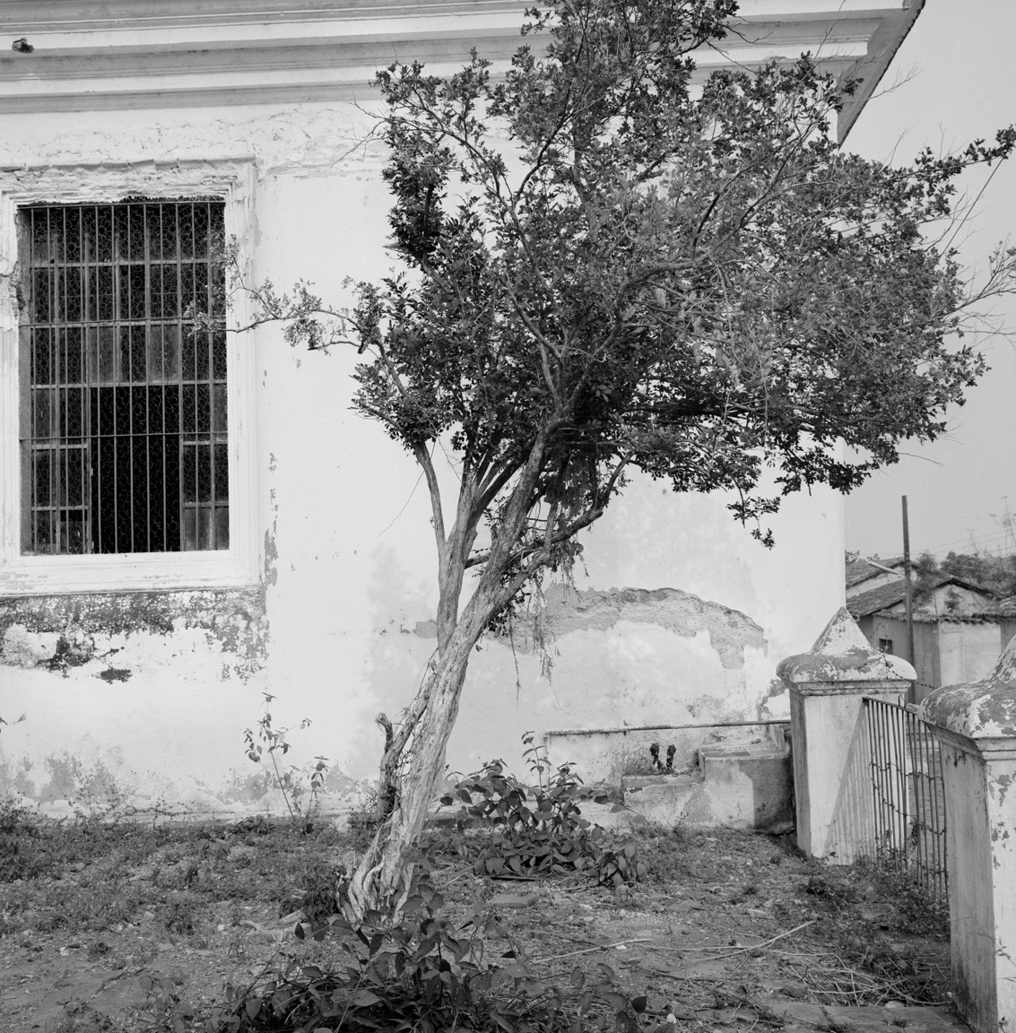 A tree stands in front of a partially abandoned municipal government building May 10, 1983 in Cinquera, El Salvador. Cinquera was often held by People's Liberation Forces (FPL) guerrillas with sporadic presence of central government officials.