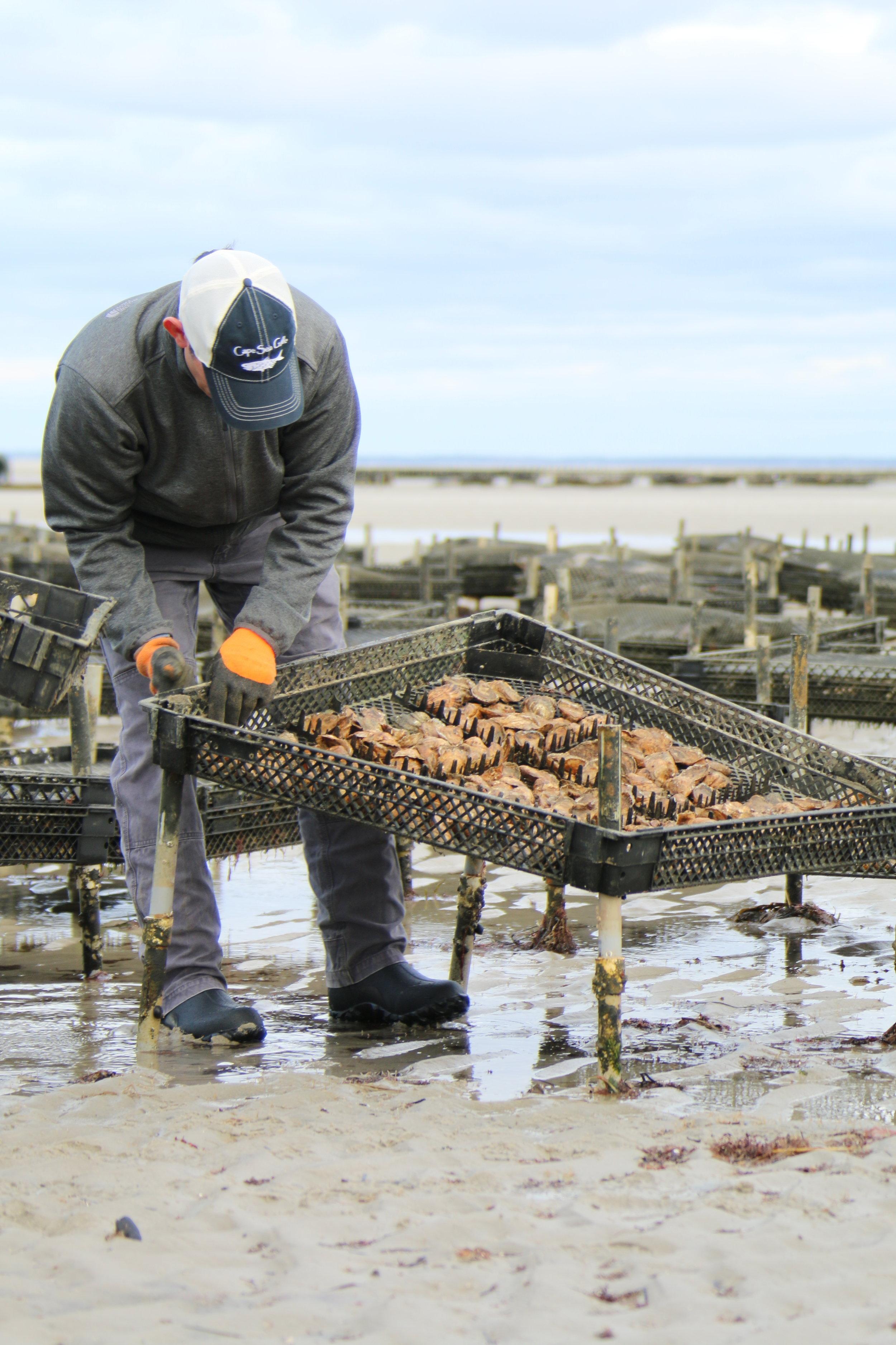 NELTV oysters_7.JPG