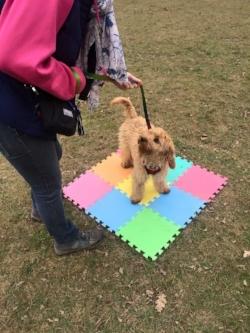 puppy ralph.jpg