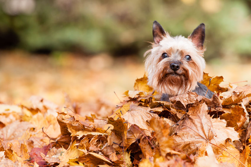 dog in leaves.jpg