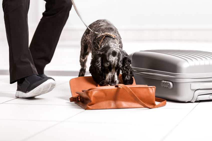dog searching luggage.jpg