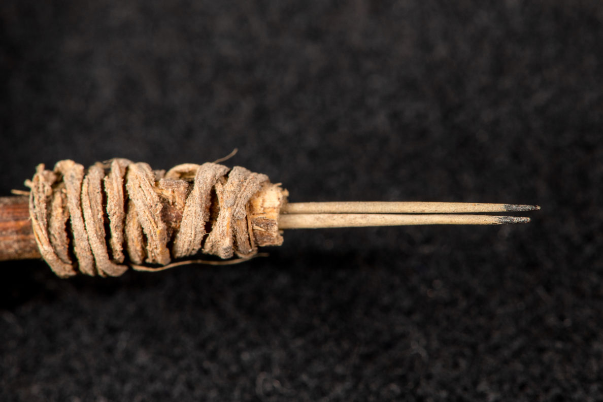 A tattoo needle dating back to between 100 and 200 CE, with one-centimeter-long cactus spines with pigment on the tips, has been identified among artifacts found at Utah's Bears Ears area. (Photo courtesy Washington State University)