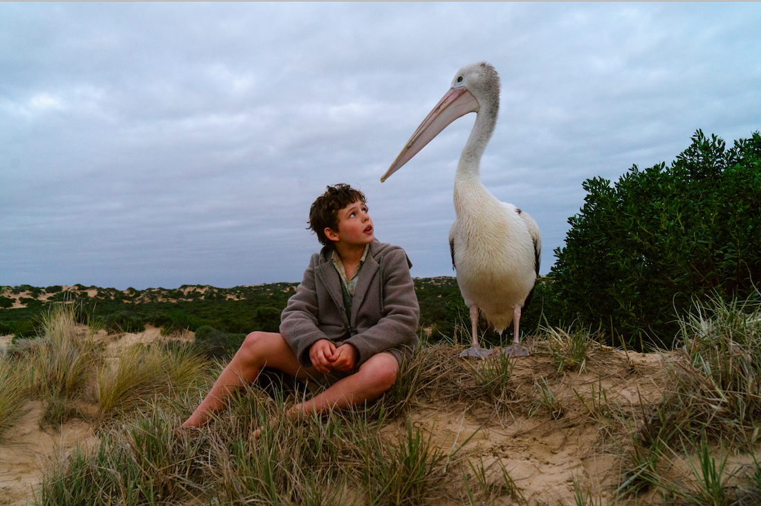 """Michael (Finn Little) and his pelican, Mr. Percival, in a scene from the Australian family drama """"Storm Boy."""" (Photo courtesy Ambience Entertainment)"""