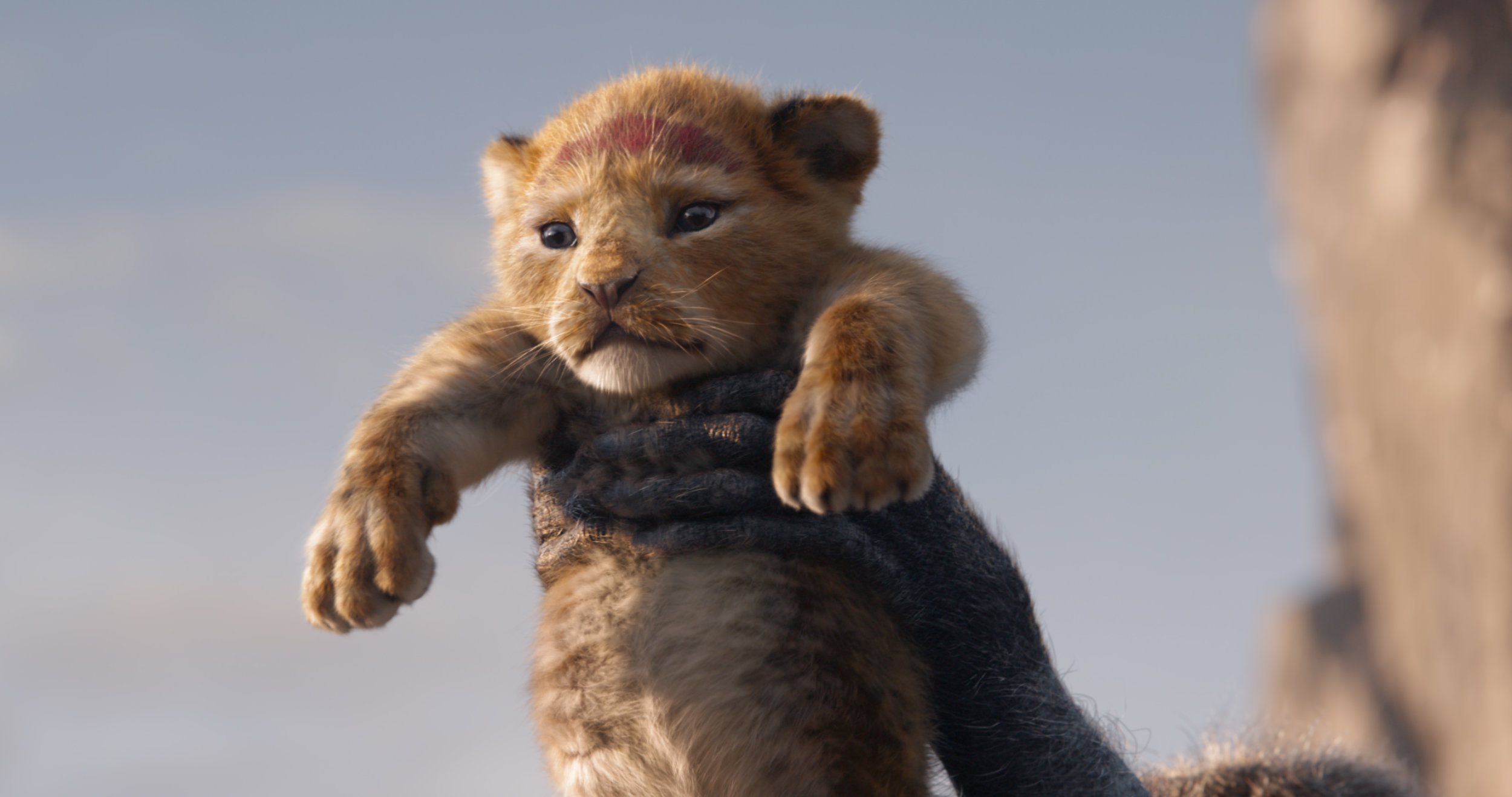 """The young cub Simba is presented to the animals of the savanna in Disney's computer-animated version of """"The Lion King."""" (Image courtesy Walt Disney Pictures.)"""