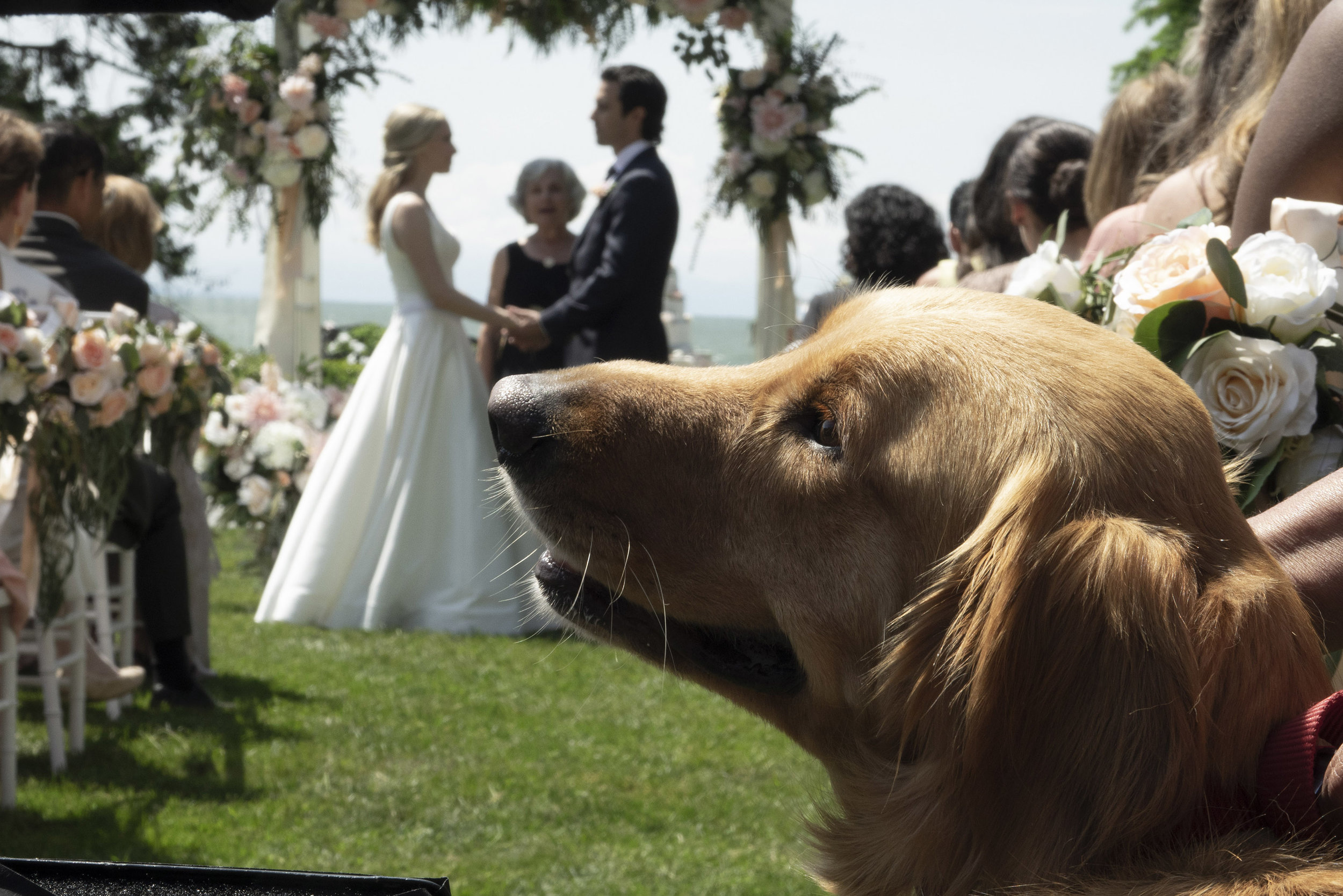 """Enzo, a labrador, is ringbearer at the wedding of Eve (Amanda Seyfreid) and Denny (Milo Ventimiglia) in a scene from the drama """"The Art of Racing in the Rain."""" (Photo by Doane Gregory, courtesy of 20th Century Fox.)"""