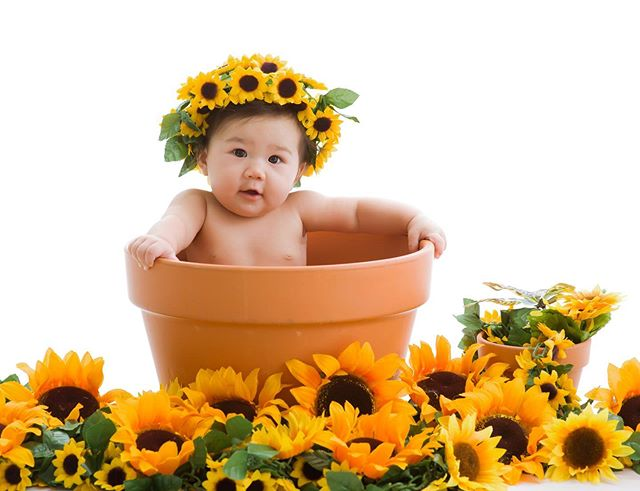 What is fall without sunflowers? 🌻 #babyphotographer #fallphotos #hawaii #hawaiimom #photographer #infantphotography #sunflowers