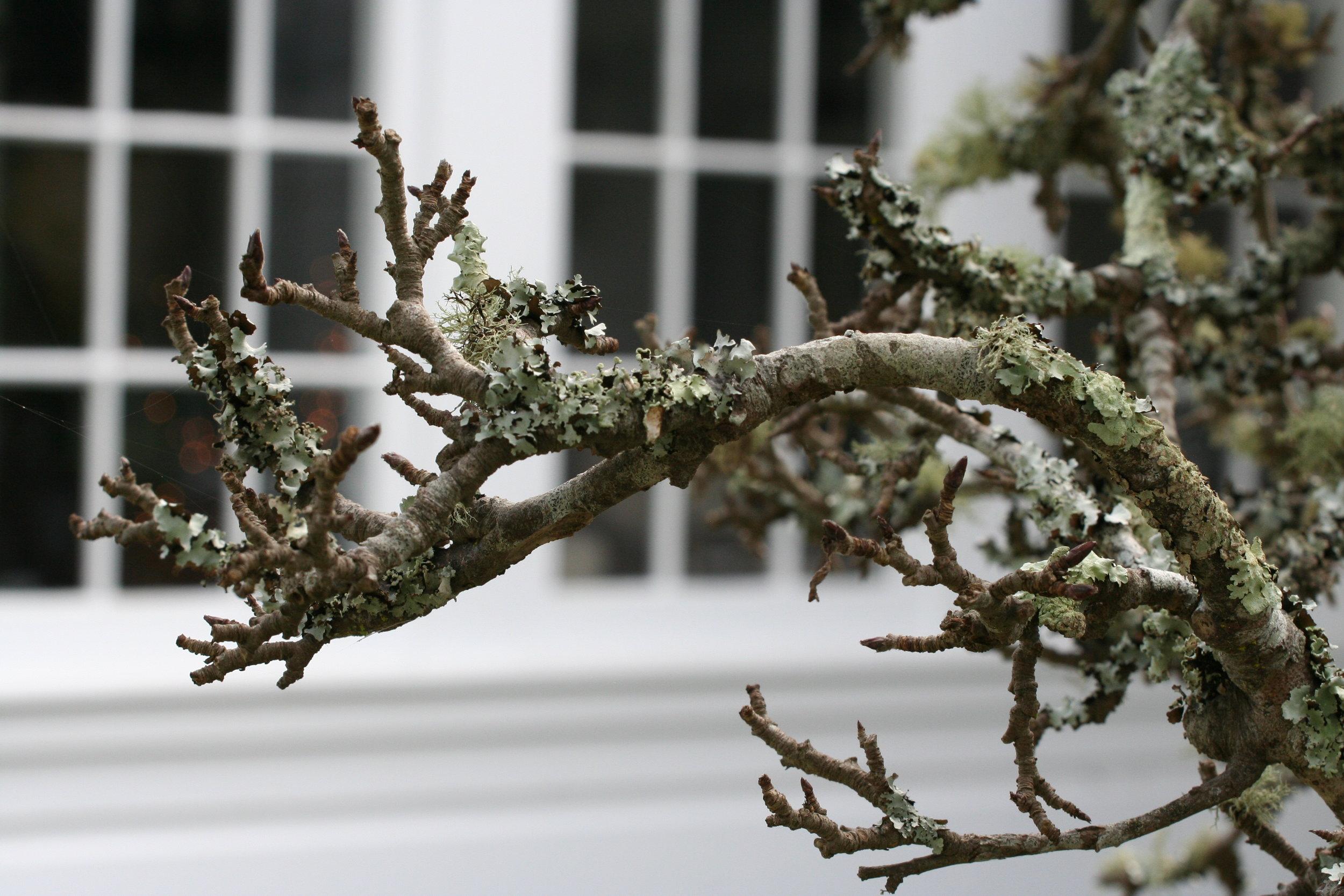 Branch window.jpg
