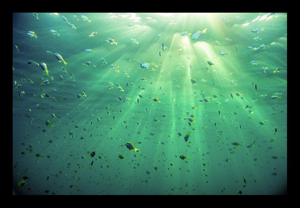 FishBowl_65x44cm.jpg