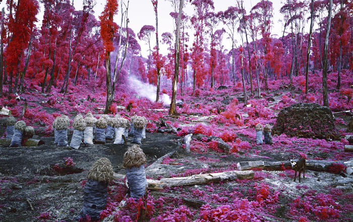 Richard Mosse, Hunches in Bunches, 2011