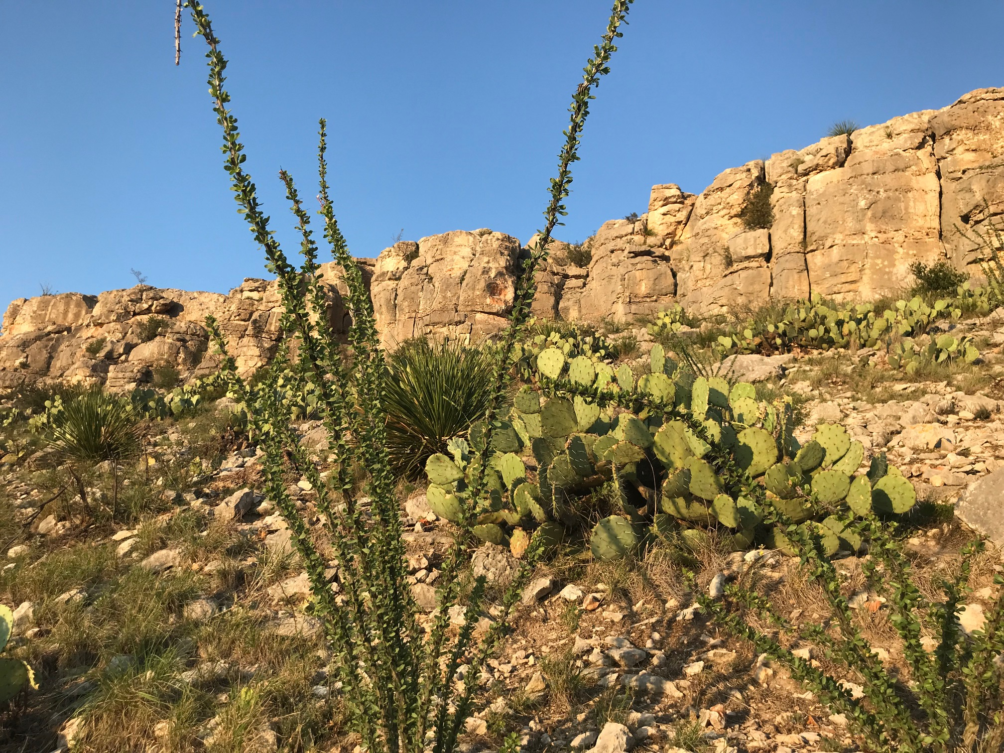 Desert Scene.jpg
