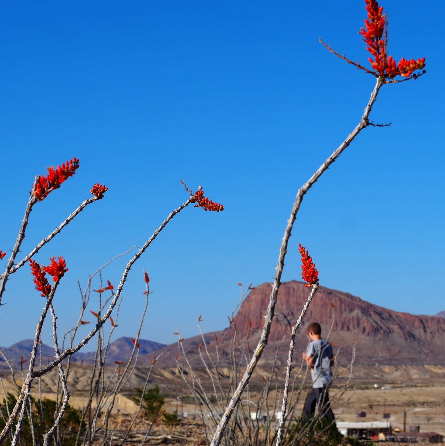 picture taken in big bend national park