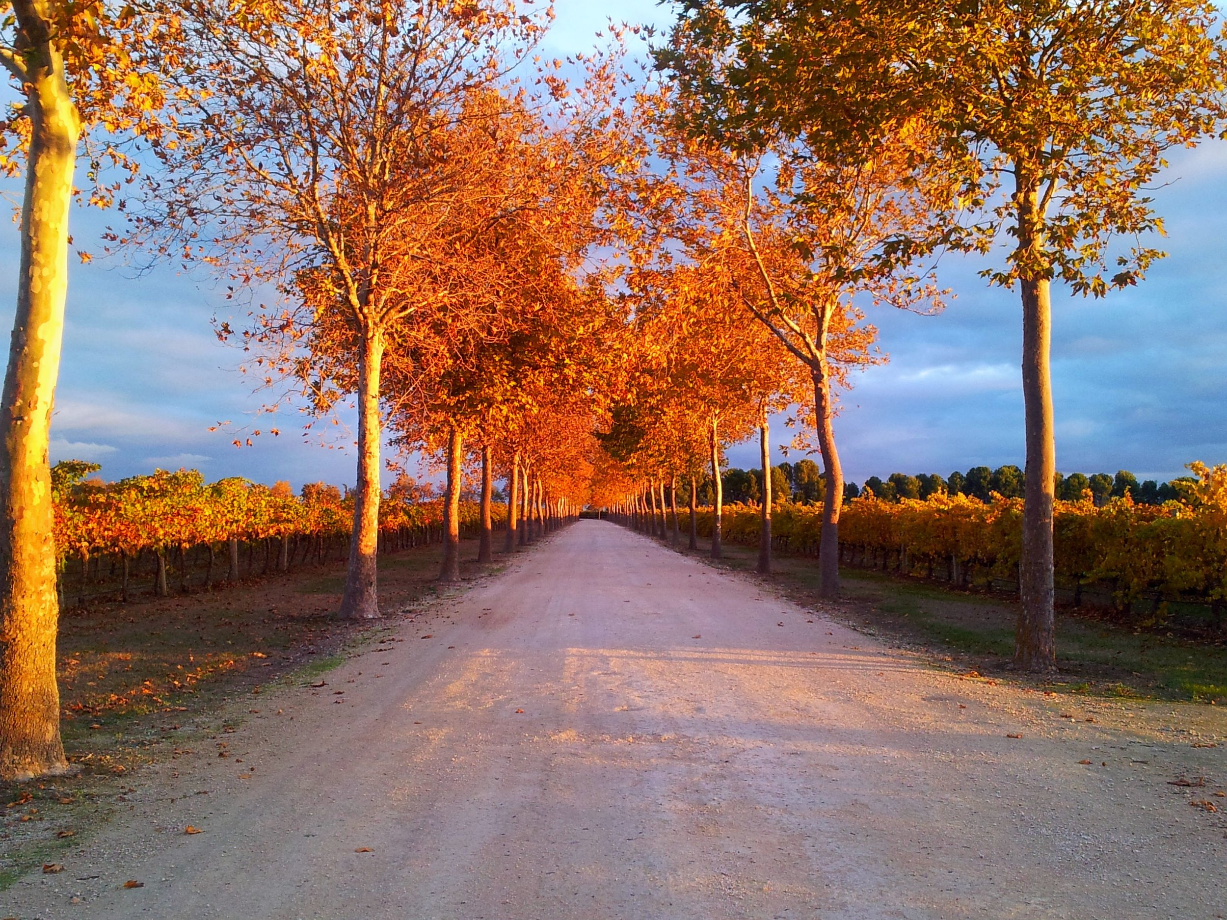 The driveway to Rymills in Autumn