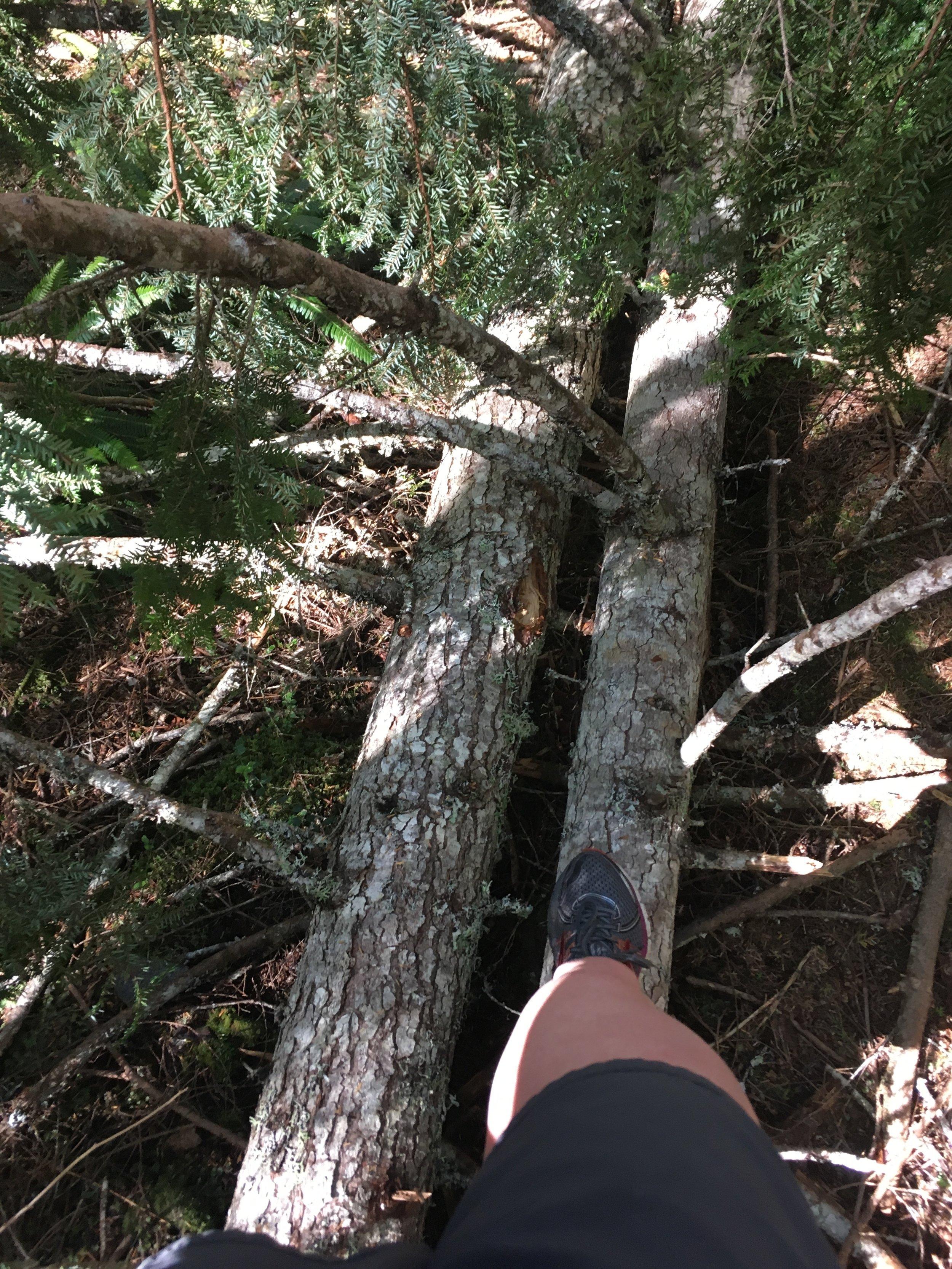 """Trail """"running"""" on Gilford Island."""