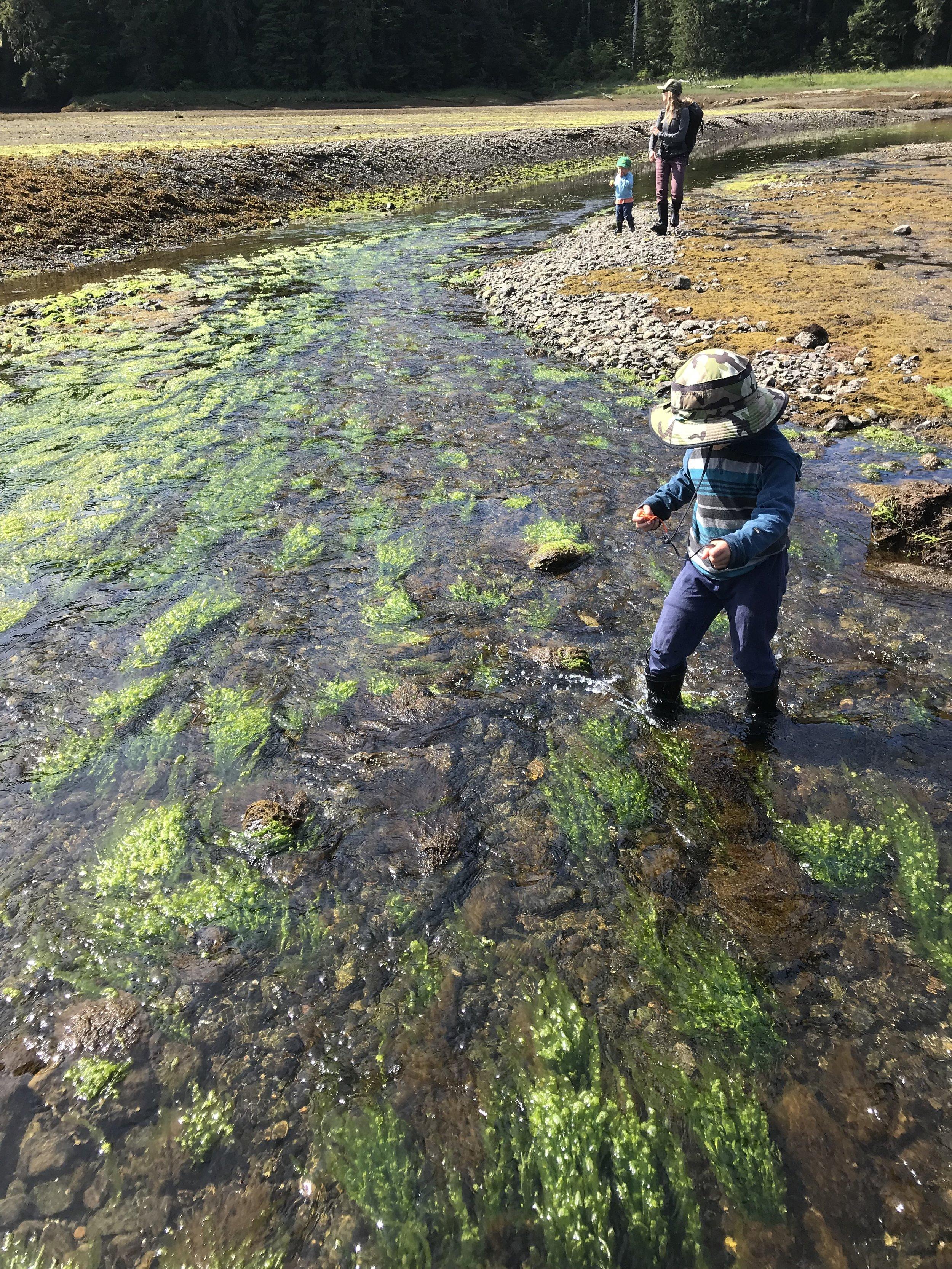 Low tide exploring.