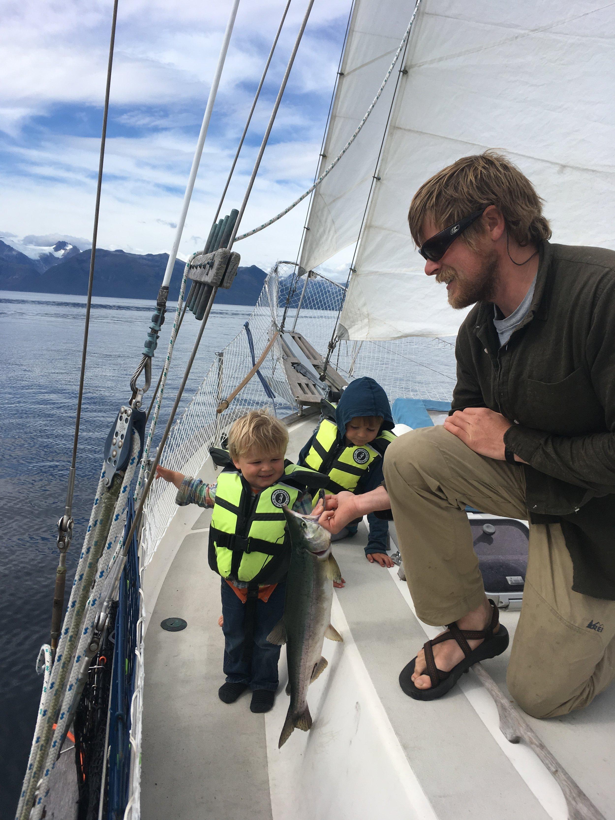 Salmon under sail!