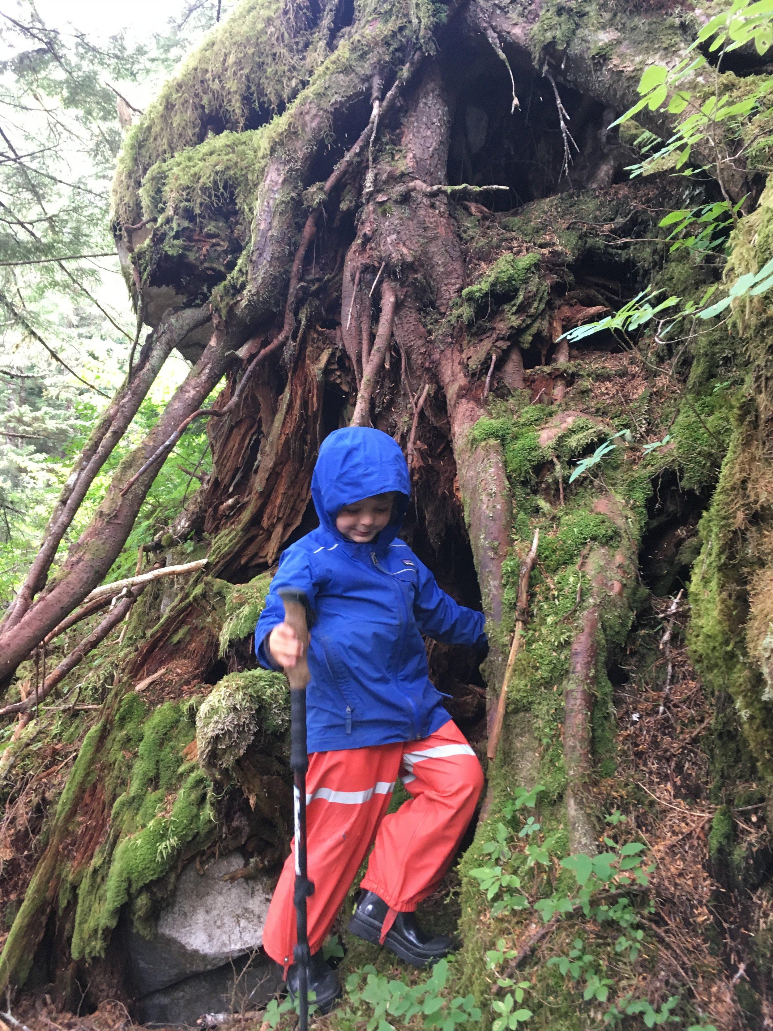 Rainforest climb.