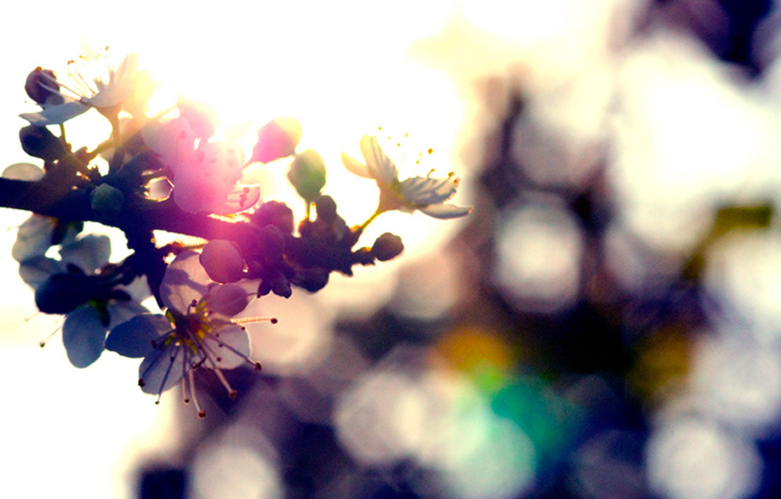 20100413-Spring Hawthorn (118mb)Ik.jpg