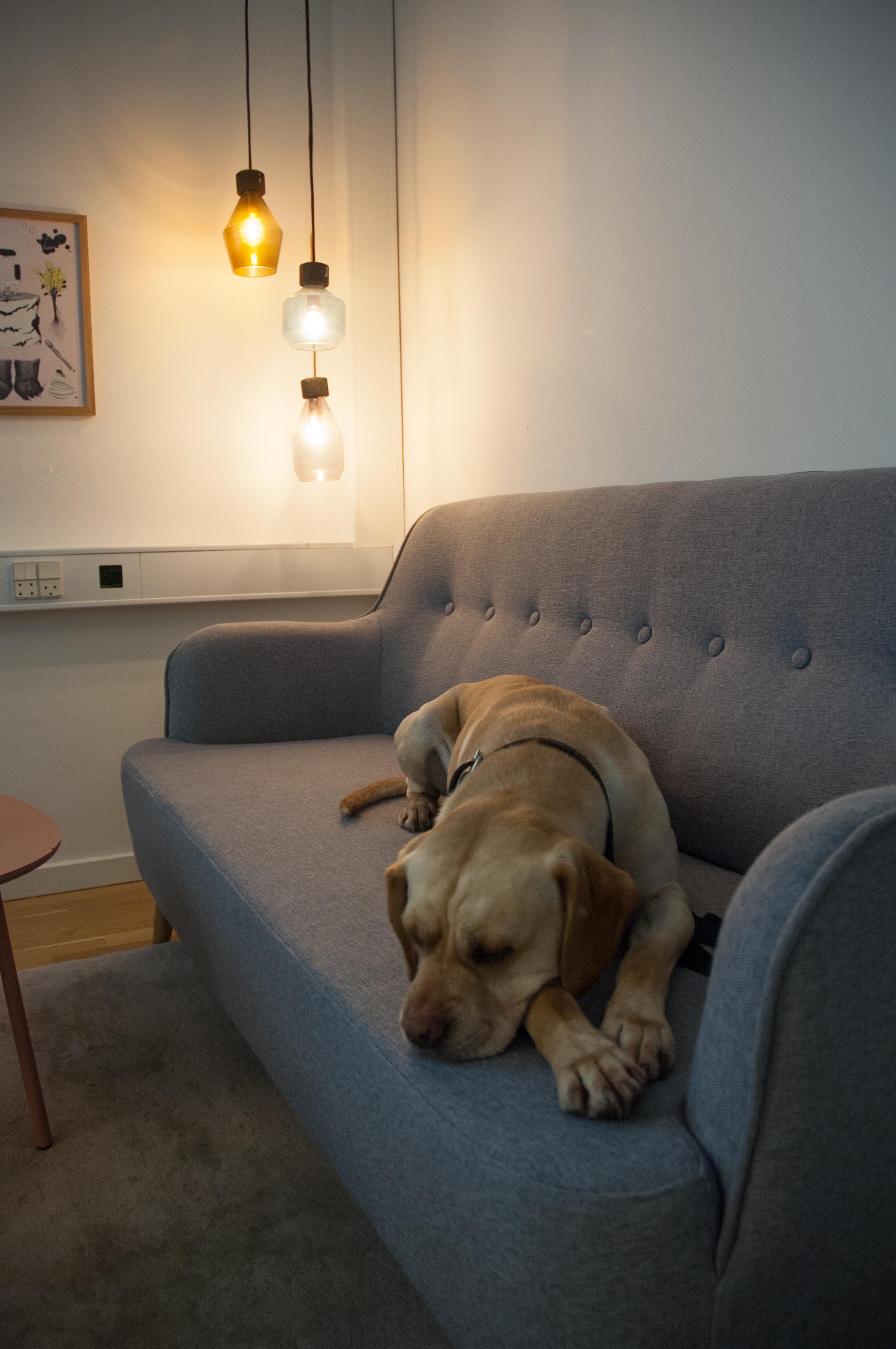 sofa_dog.jpg