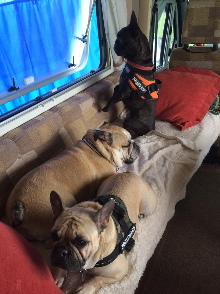 FBS Maggie and Ozzie chilling in their very own caravan….or so they think!