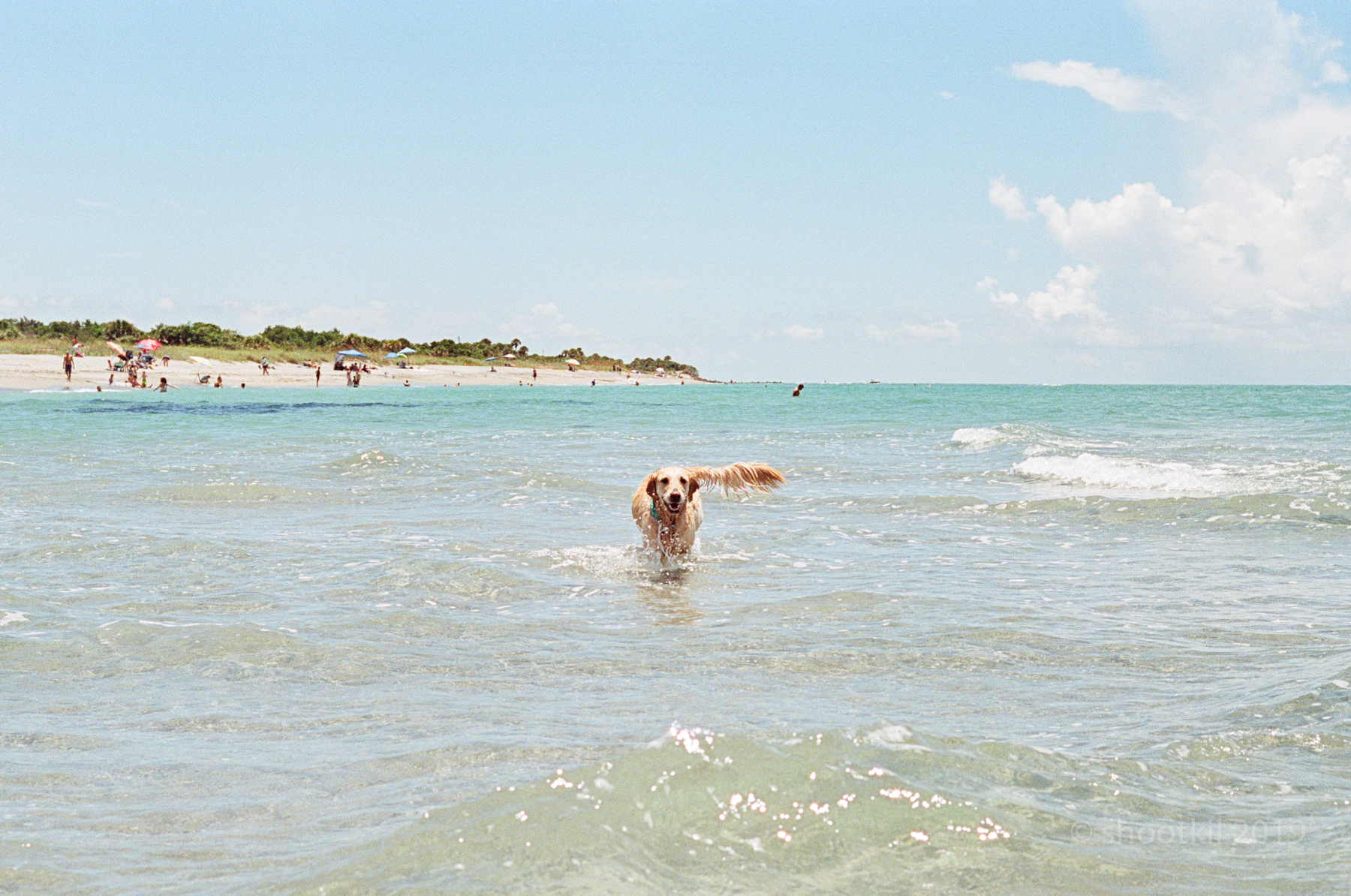 Dog-Beach-Ripley-07272019-15.jpg