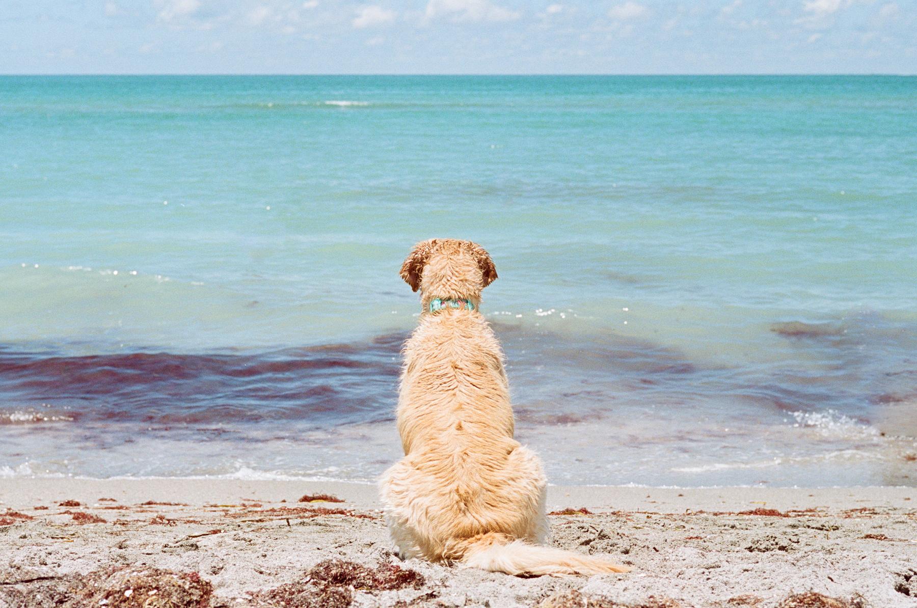 Dog-Beach-Ripley-07272019-25.jpg