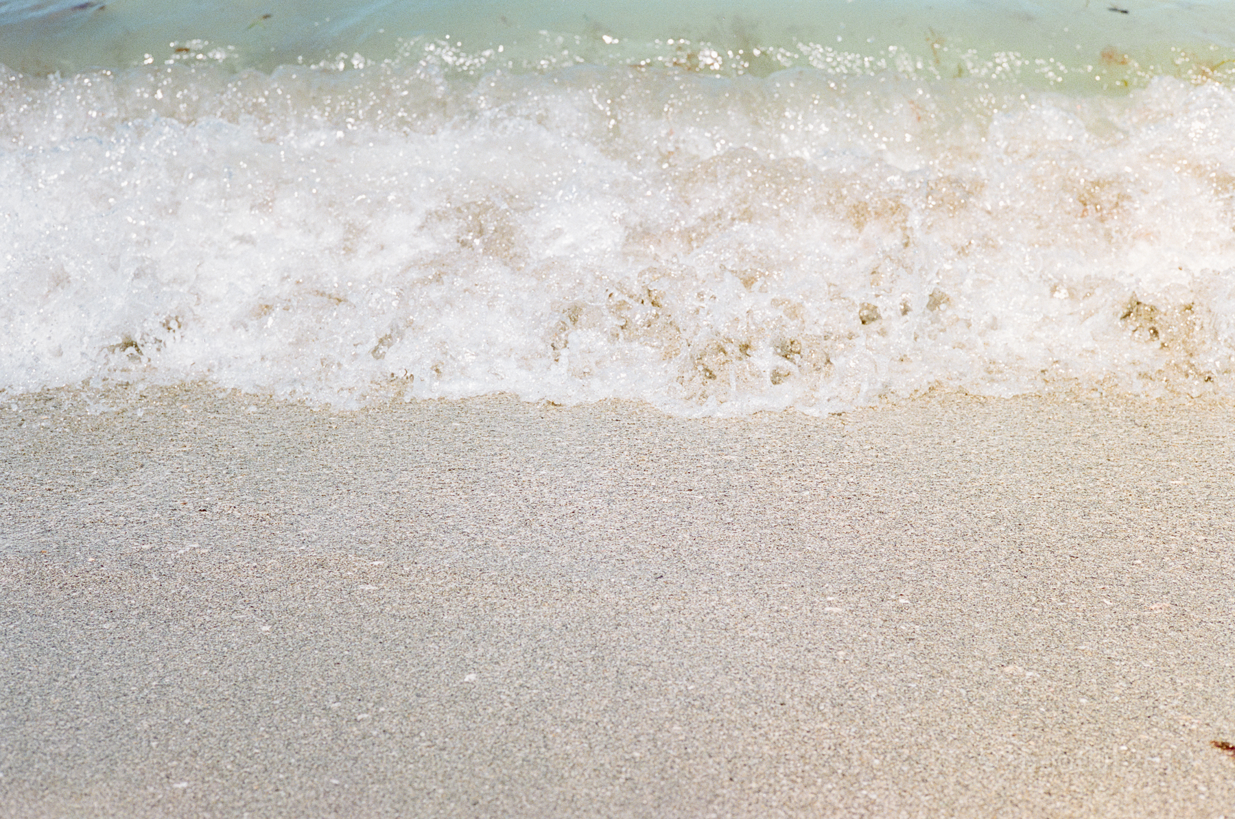Dog-Beach-Ripley-07272019-31.jpg