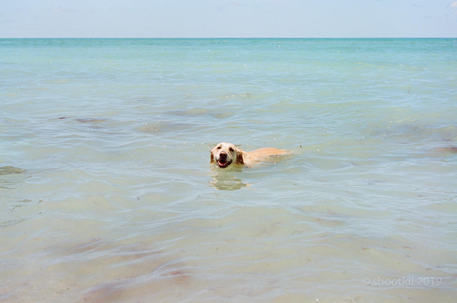 Dog-Beach-Ripley-07272019-37.jpg