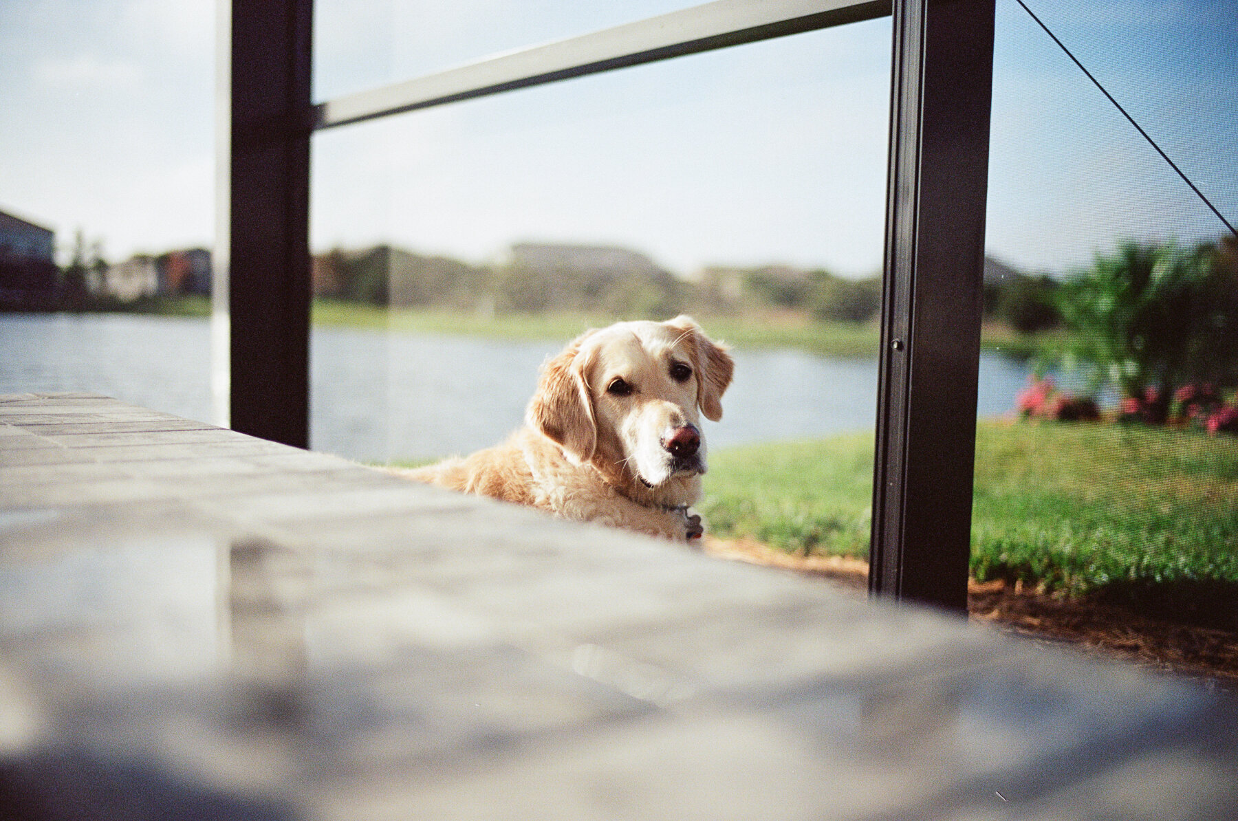 Leica-M6-Pool-Chloe-8.jpg