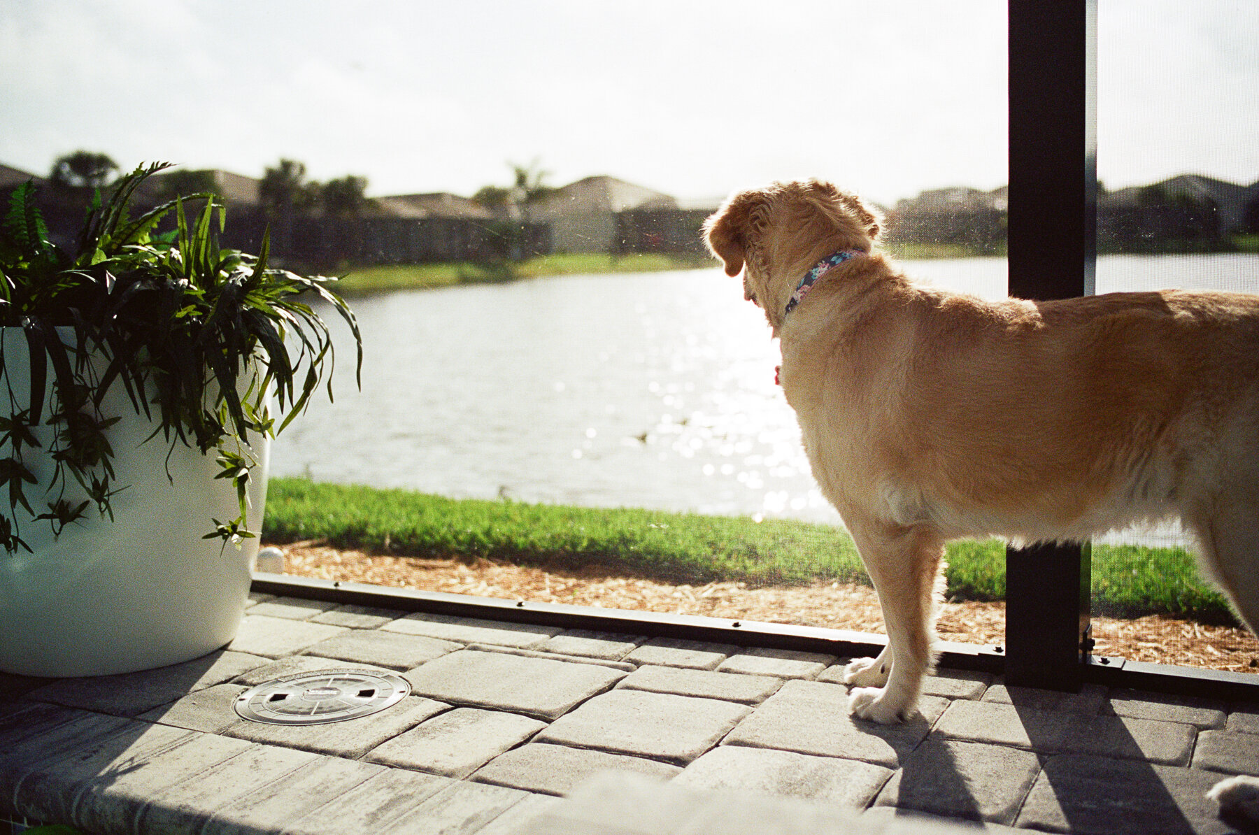 Leica-M6-Pool-Chloe-5.jpg